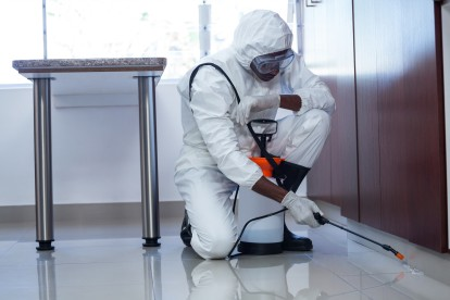 Emergency Pest Control, Pest Control in Blackheath, SE3. Call Now 020 8166 9746